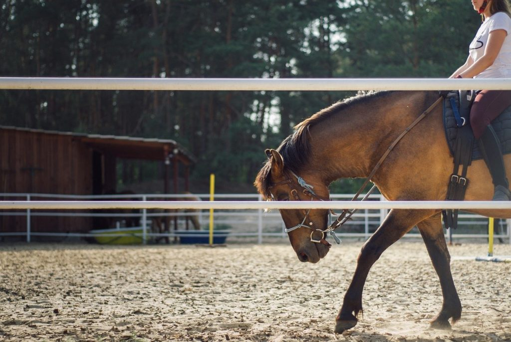 Real Sport: What You Need To Know About Horseback Riding